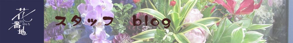 花番地スタッフ blog